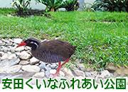 安田くいなふれあい公園
